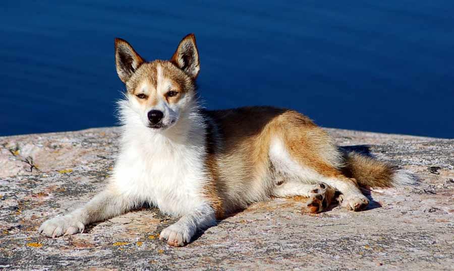 23 удивительных факта о собаках, которые мало кто знает