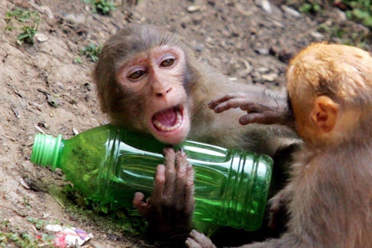 Животные с зависимостями: алкоголики и токсикоманы