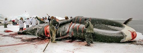 разделка кита