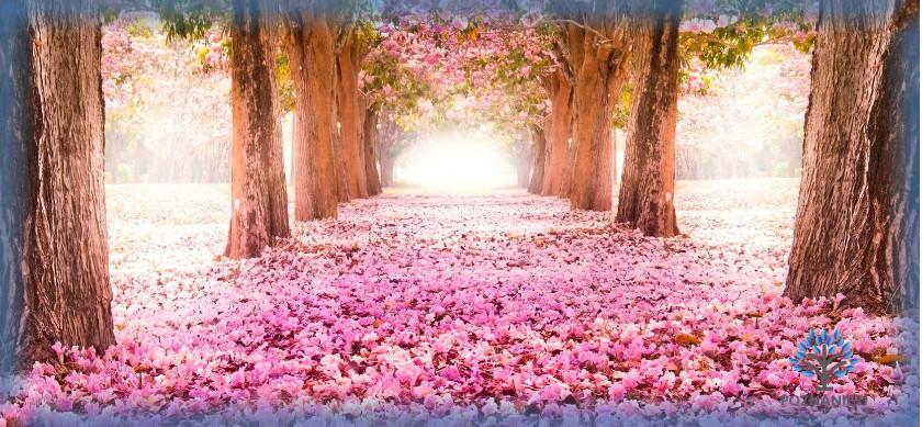 Аллея цветов