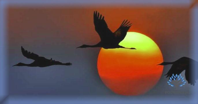 Мигрирующие журавли
