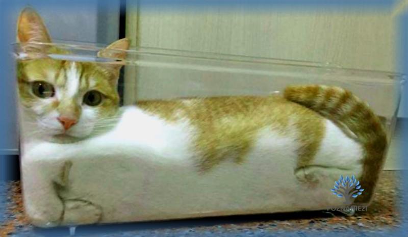 Кот в пластиковом лотке