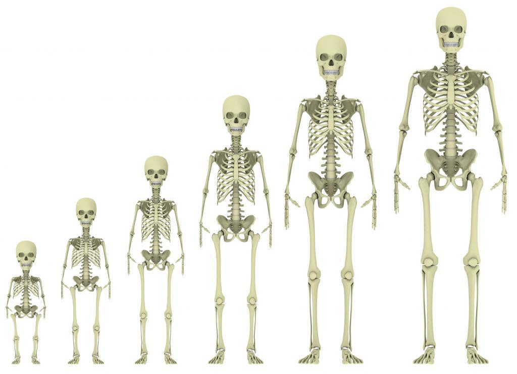 6 удивительных фактов о человеческом теле