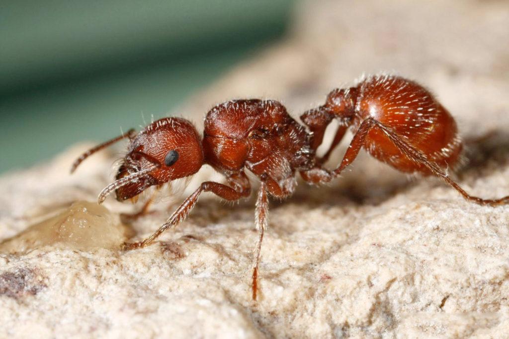 10 самых опасных для человека насекомых