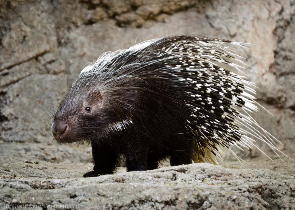 20 удивительных механизмов защиты от хищников, появившиеся в ходе эволюции