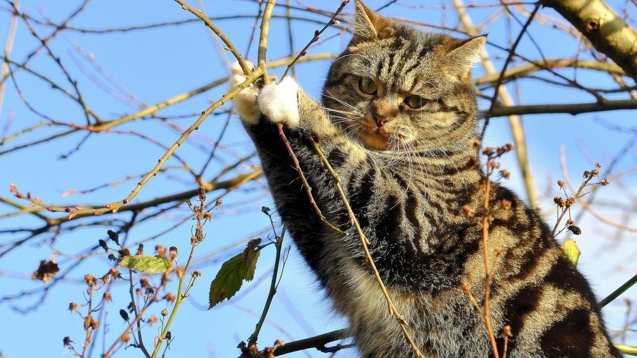 10 странных синдромов, которые бывают только у животных