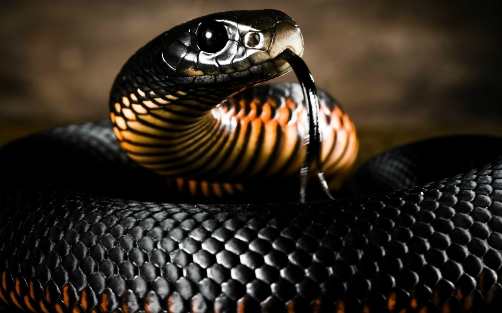 10 самых ядовитых змей на планете