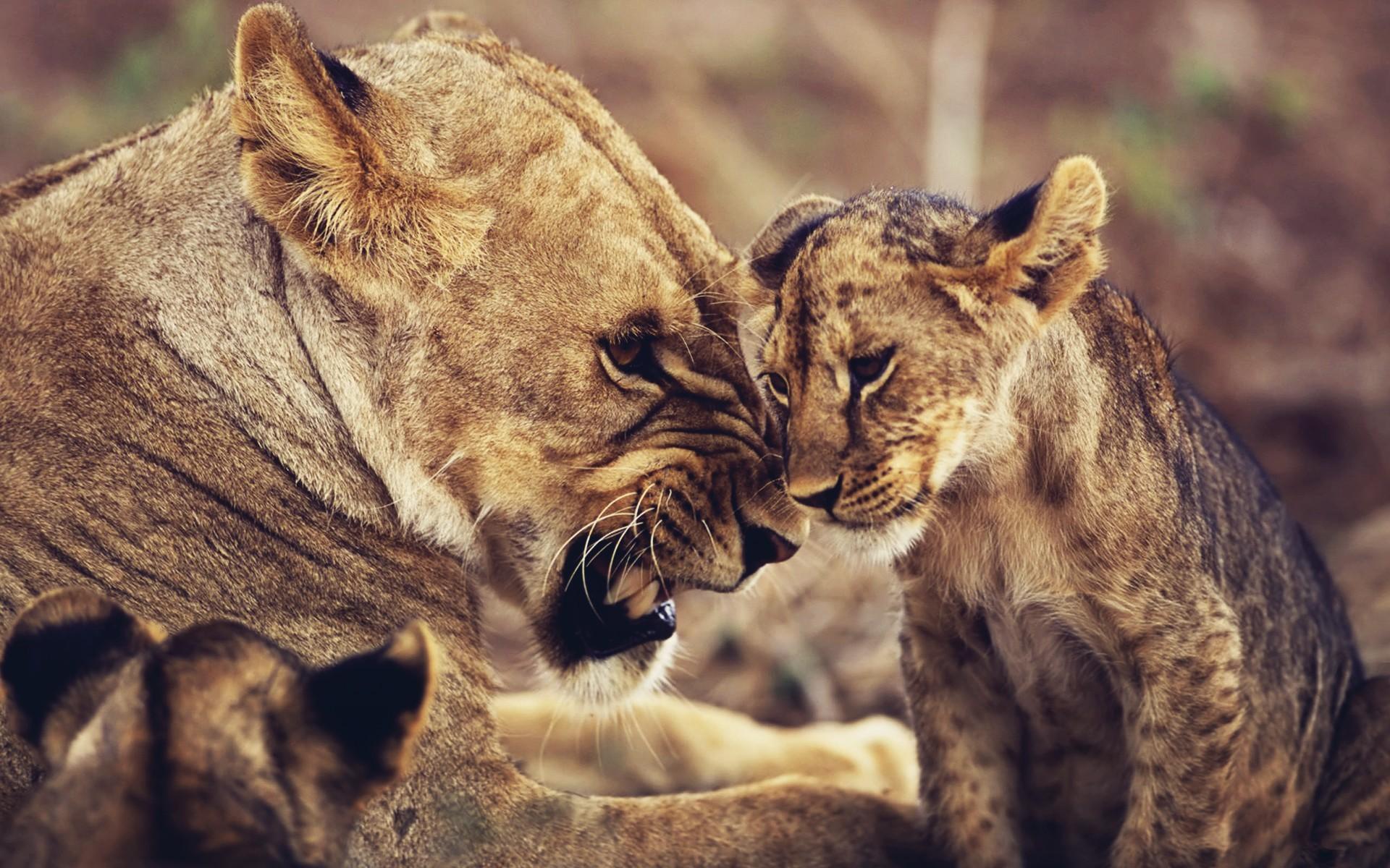 10 страшных животных, которые на самом деле хорошие родители