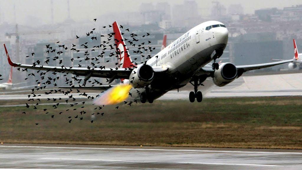Крылатый таран: птицы против самолета