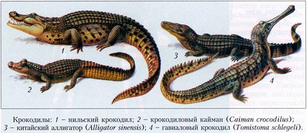 Их родственники мертвы уже миллионы лет. Живое ископаемое