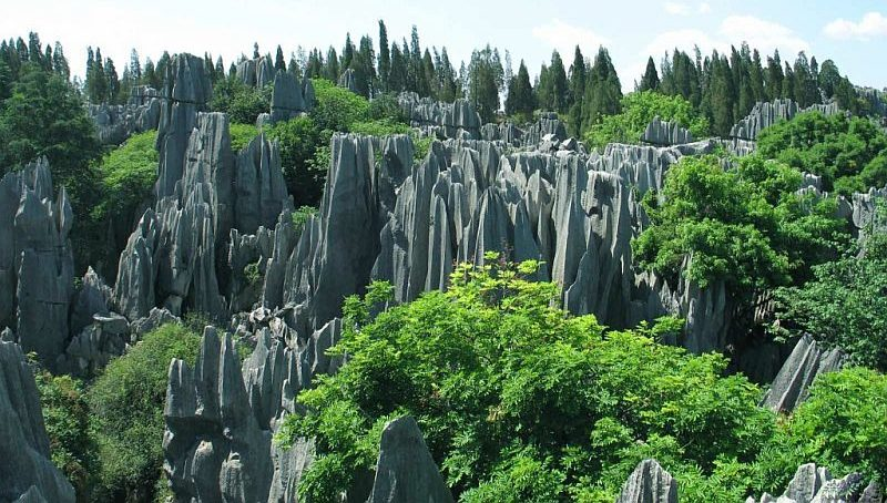 Завораживающие каменные леса