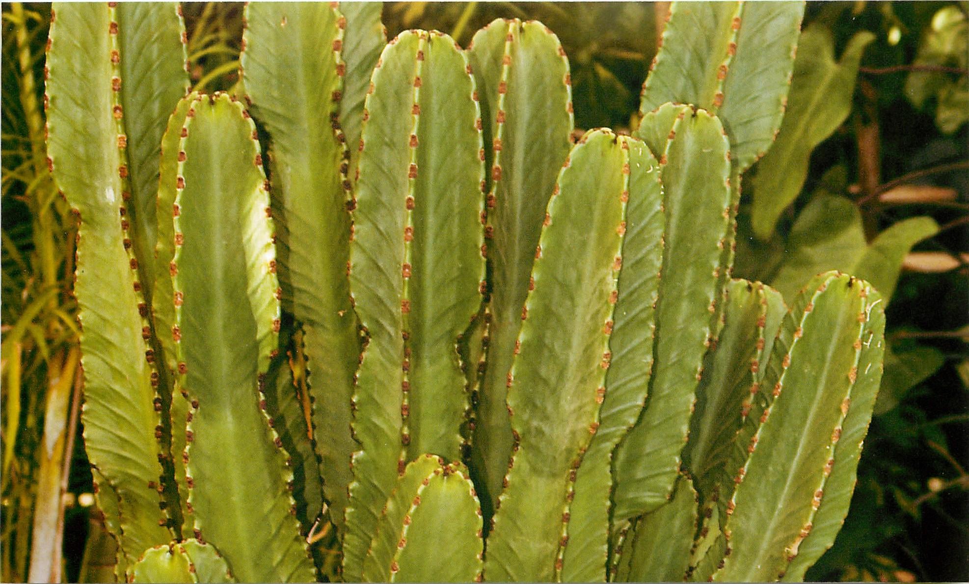 Самые опасные растения в мире