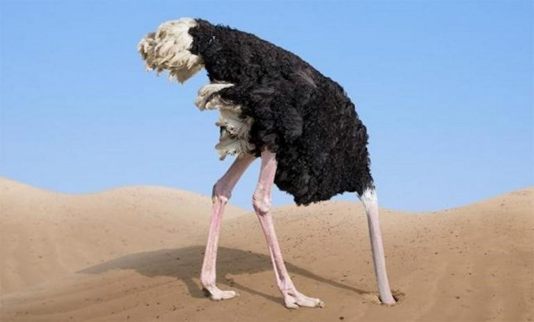 Миф о страусах