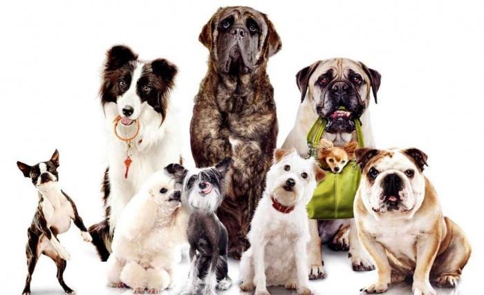 Собаки различных пород