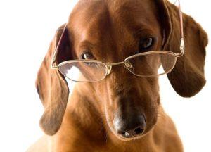 пес ученый