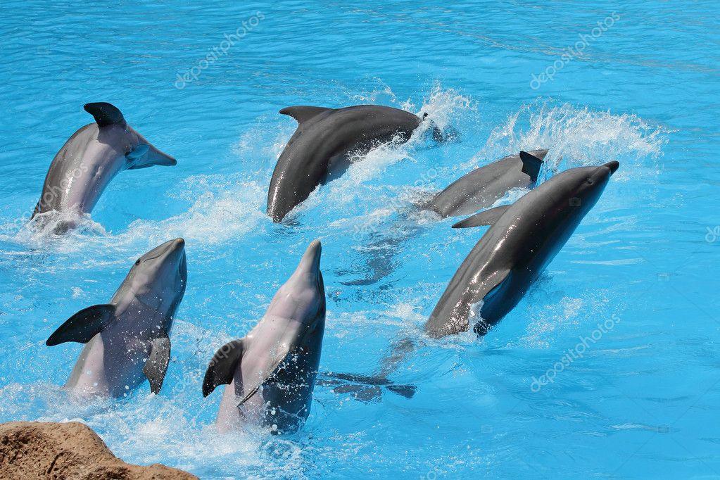 Интересные факты о дельфинах