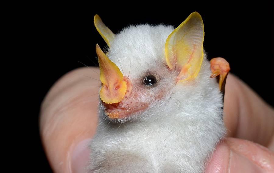 Интересные факты о летучих мышах