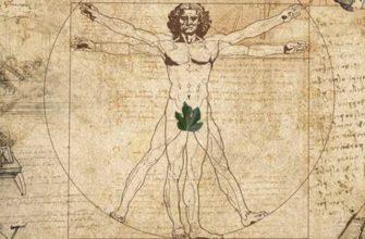 Человеческое тело рисунок Да Винчи