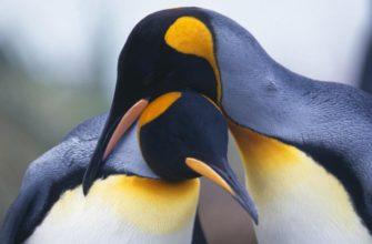Пингвины - заглавная
