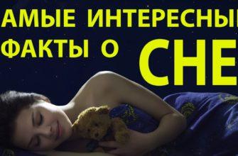 Факты о сне - заглавная