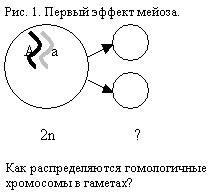 """Конспект урока биологии в 10-м (11-м) классе по теме """"Способы деления клеток"""" : Биология"""